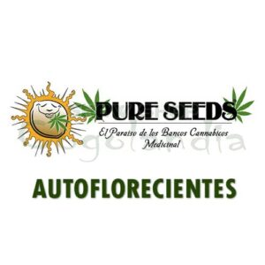 Graines de marijuana Auto Pure Seeds 13