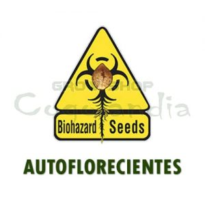 Graines de marijuana automatique Biohazard Seeds 1