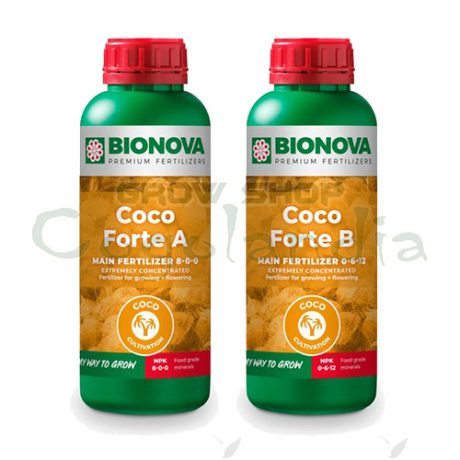 coco forte ayb