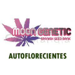 Moon Genetic Semillas Autos de Marihuana 1