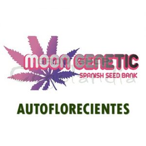 Graines de marijuana Moon Genetic Autos 7