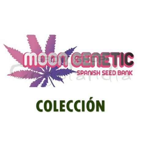 moon genetic semillas COLECCIÓN