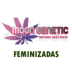 Moon Genetic Semillas Feminizadas de Marihuana 2