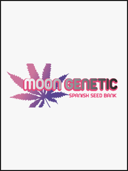 semillas-de-marihuana-moon-genetic