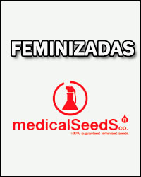 semillas-medical-seeds