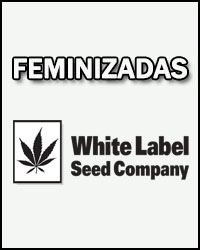 White Label Temporada