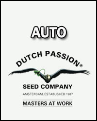 Dutch Passion Autofloreciente