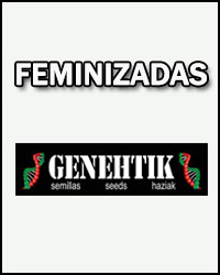 Genehtik Seeds Temporada