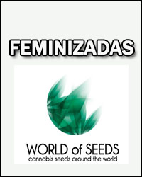 World Of Seeds Temporada