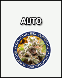 Advanced Seeds Auto