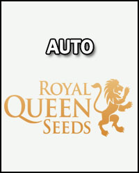 Royal Queen Seeds Auto