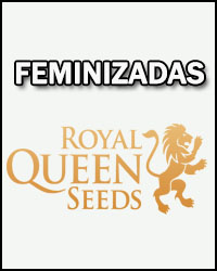 Royal Queen Seeds de Temporada