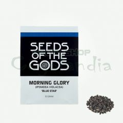 Morning Glory 10 gr Semillas 5
