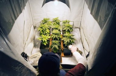 grow-shop-cogolandia-young-man-tending-to-marijuana-plants-crossprocessing-applied